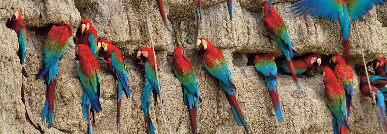 The Secret Lives of Parrots