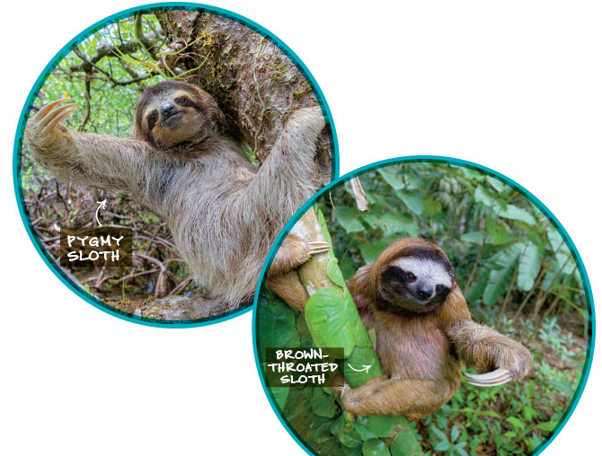 Searching for Sloths